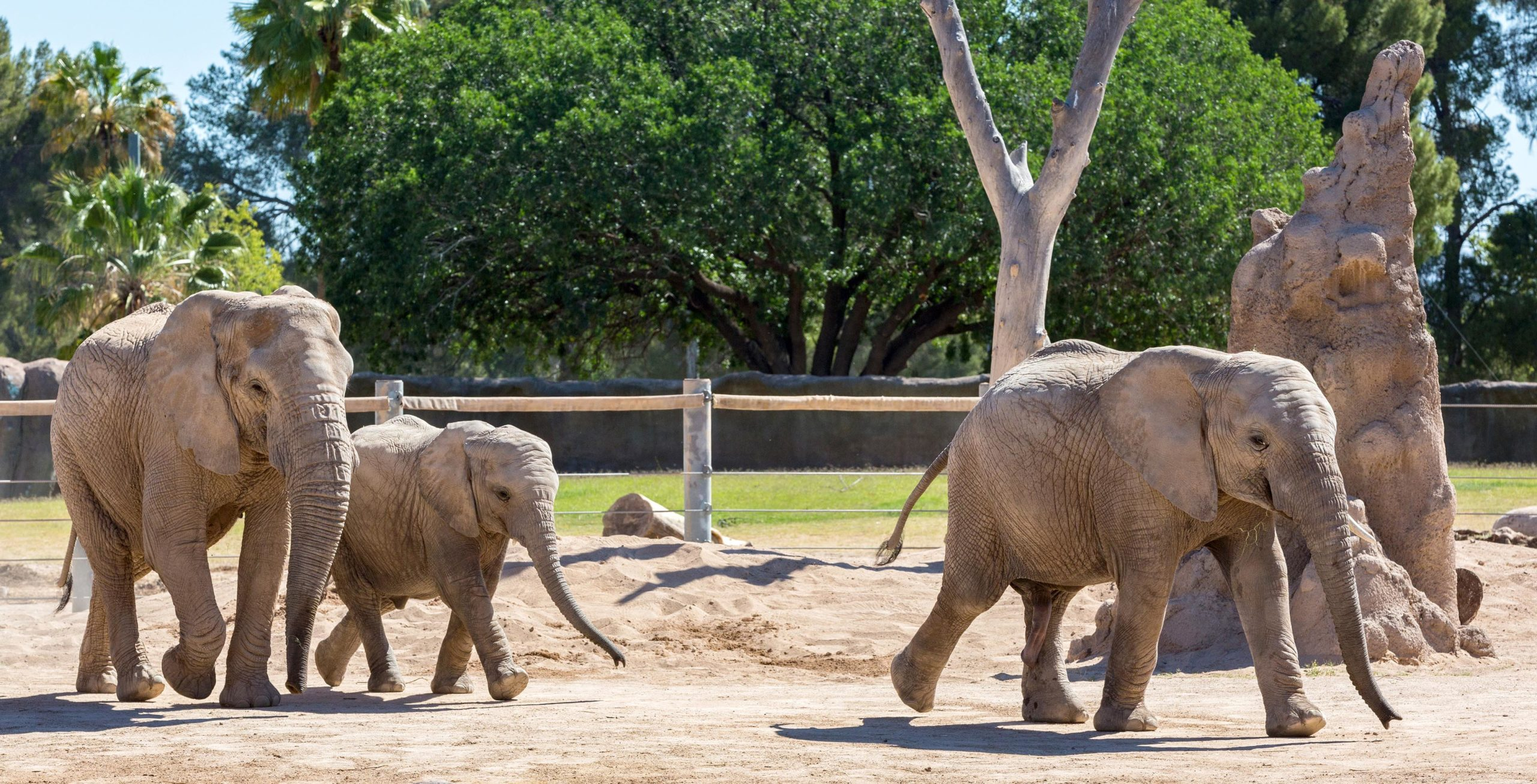 August Culture Pass Spotlight: Reid Park Zoo